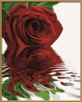 Malen nach Zahlen MNZ - Rote Rose
