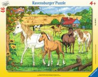 Ravensburger Pferde auf der Koppel (6646)